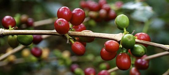 Семинар Путь Кофе